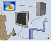 Scheme of connecting a monkey's brain to a robotic arm. Credit: Duke University department. neurobiology)