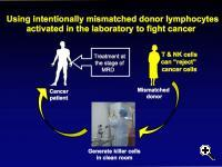 "Donor lymphocyte infusion – Extract ""killer"" cells from a mismatched donor, inject them into a patient at the stage of minimal residual disease, and they can kill the remaining cancer."