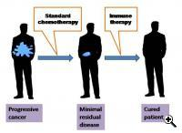 Principle of immune therapy