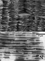 Top: Strong, Light, and Stretchy Materials; bottom: the new nanocomposite which mimicks its structure (Credit: J. Woltersdorf and E. Pippel, MPI for Microstructure Physics, Halle, Germany)