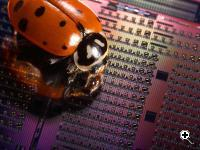 A ladybug crawls across an experimental Avalanche Photodetector chip containing silicon optical devices that are only a fraction of a millimeter. (Credit: Intel)