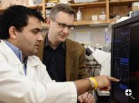 Doctoral student Shyam Khatau, left, and Denis Wirtz, director of the Johns Hopkins Engineering in Oncology Center, played a key role in finding a bundled 'cap' of thread-like fibers that holds a cell's nucleus in its proper place. (Source: Photo by Will Kirk, Homewood photo.jhu.edu)
