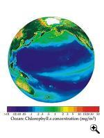 The distribution of chlorophyll throughout the Pacific Ocean. (Source: NOAA)