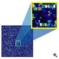 fluorescence coming from the squares (probes) tells researchers whether a gene is greatly expressed (white and red features) or not (blue and black features). (credit: Affymetrix)