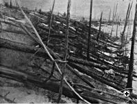 Trees were knocked down and burned over hundreds of square km by the Tunguska meteoroid impact