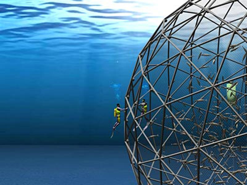 Robotic Fish Cages Tfot