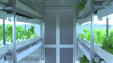 New: a Personal Vegetable Factory