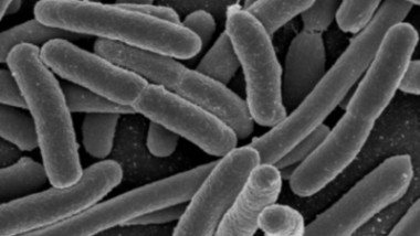 Bacteria Creates Toxic Molecules