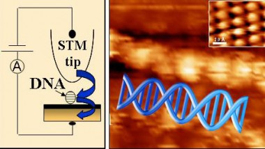 Electronic Structure of DNA Revealed