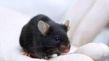 BioExplorers: Mice Bomb Sniffing Technology