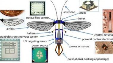 RoboBees – the Next Small Step for Robotics