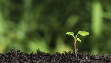 Protected: How to Reduce your Environmental Footprint Through Plant Proteins