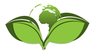 What to Eco-Conscious Consumers Want from Brands?