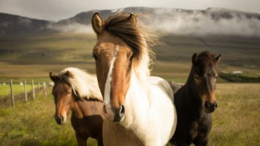 Galloping Into The Future Of Equine Agriculture