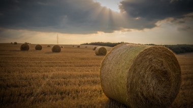 Can We Create Opportunity In America's Rural Economy Through Tech Employment?